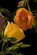 Mirrored Lysianthus