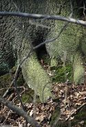 Chipmunk Hole