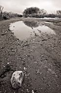 Rock and Puddle